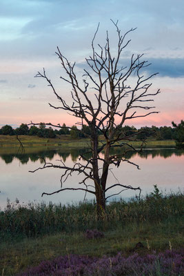 Tangersdorfer Heide August 2017 (Foto Heidrun Lorenz).