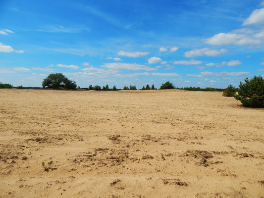 Wüste in der Uckermark.