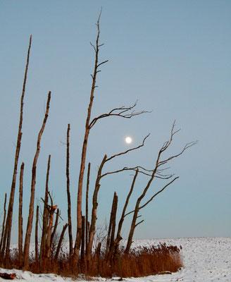 Winter in der Uckermark.