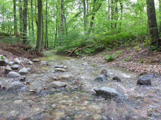 Wildbach in der Schorheide