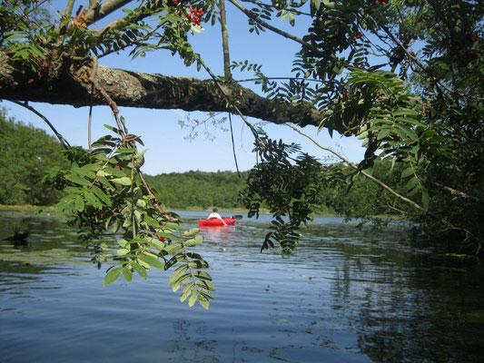 Kajaktour im Naturpark Uckermärkische Seen.