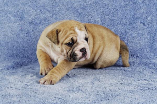 Margiela - Vier Wochen alt