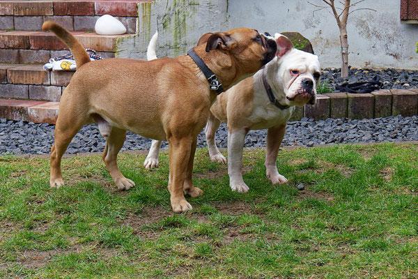 Lilli und Apollo