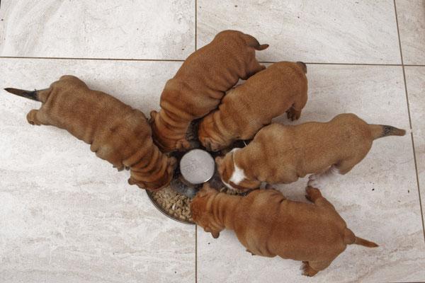 Fünf Wochen alt