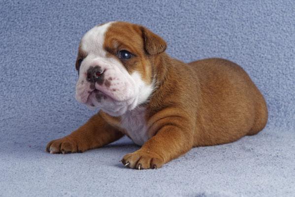 Otto, drei Wochen alt