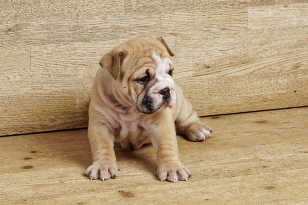 Margiela - Fünf Wochen alt