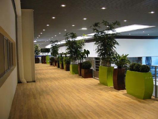 Espace entreprise avec plante verte