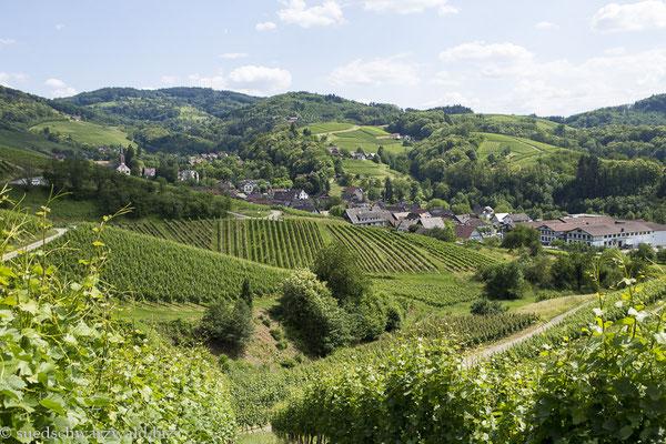 Blick über die Weinberge bei Sasbachwalden