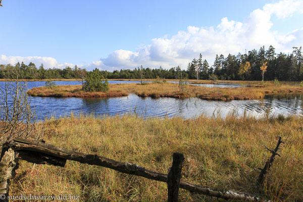 Wildseemoor auf dem Kaltenbronn