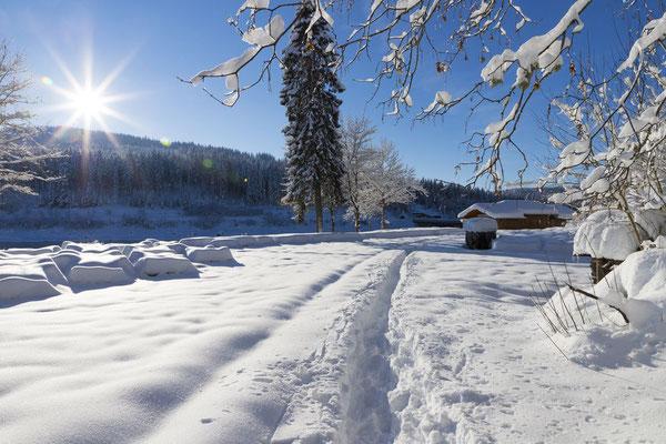 Winteridylle am Schluchsee