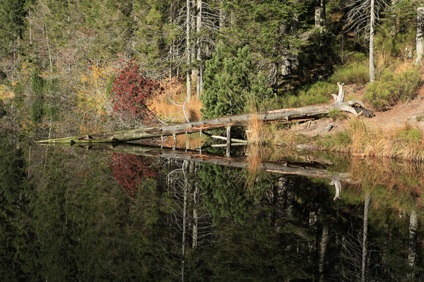 Mystische Stimmung am Wildsee