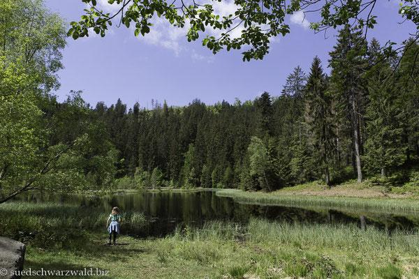 Blick über den Buhlbachsee