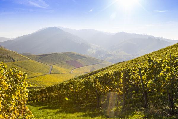 Herbststimmung in den Weinbergen von Durbach