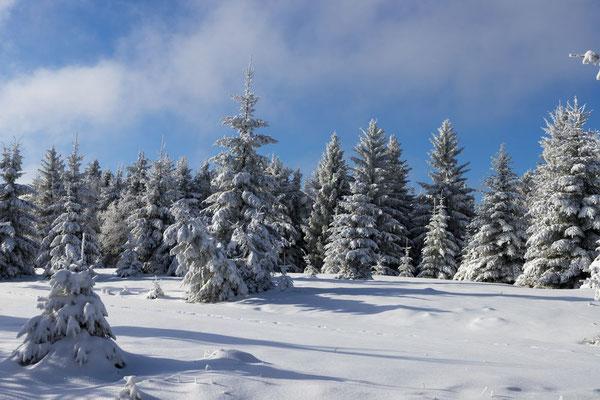 Winterwald auf dem Hohloh
