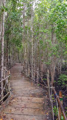 ...in den Mangroven Wald.