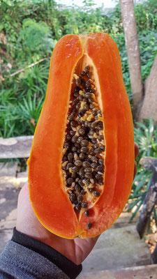 so muss eine Papaya aussehen!