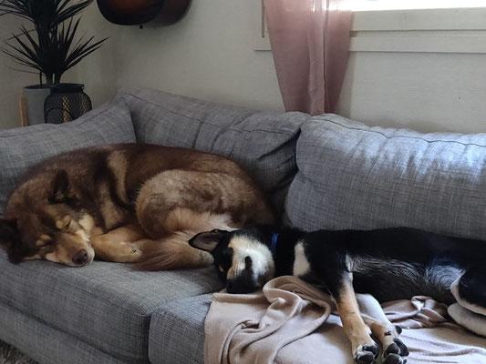 Mowgli rechts mit seinem Stiefbruder im neuen zu Hause