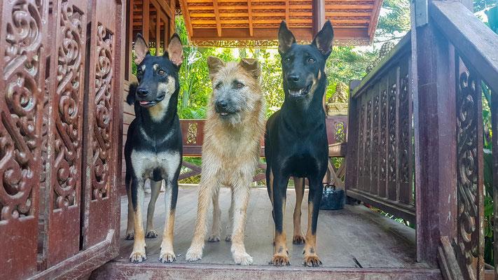 Unsere Türsteher Louis, Billy und Milo