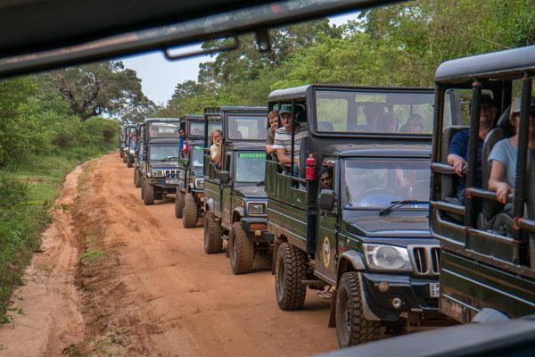 die Jeeps am Leoparden-Spot