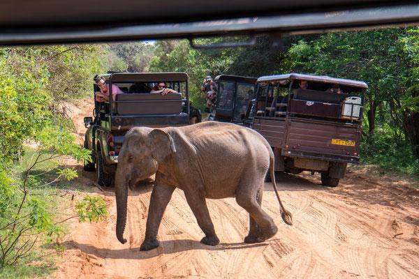 Elefanten-Vortritt!