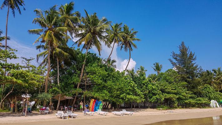 Weligama Beach - ein Surfverleih nach dem anderen