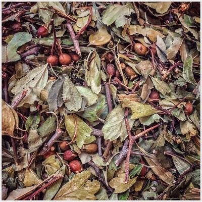 """Foulard soie """"Feuilles de thé"""" 130x130 cm"""