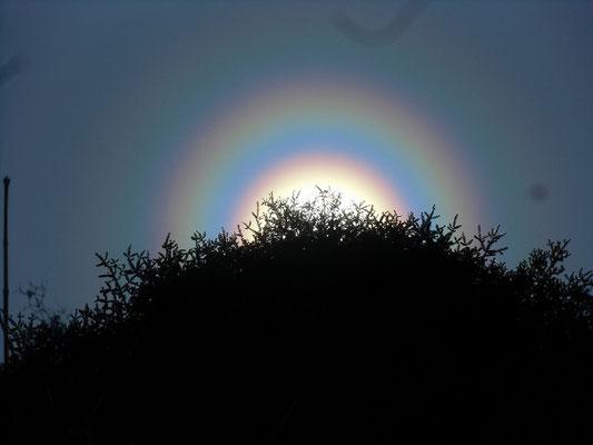 スギ花粉が原因で太陽に輪ができる「花粉光環」