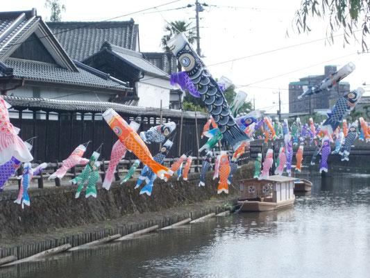巴波川の鯉のぼり