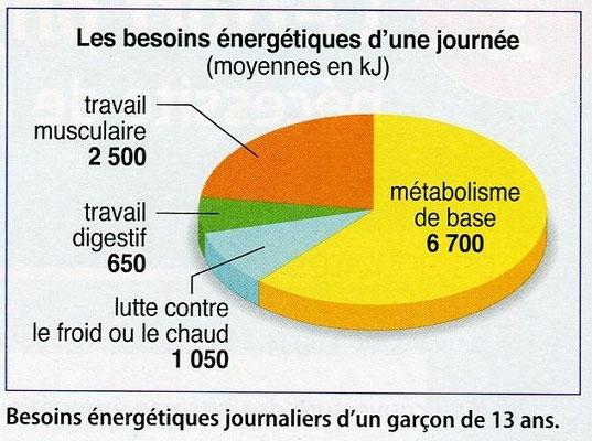 Besoins énergétiques journaliers d'un garçon de 13 ans. Source : SVT Bordas p202.
