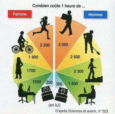 Dépenses énergétiques incompressibles ou pas chez un une personne. Source : SVT Bordas p202.