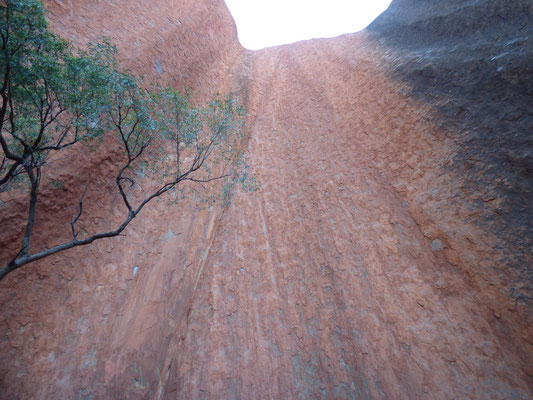 BDie Senkrechte Wand des Uluru