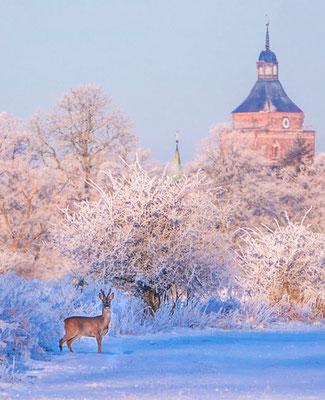 Blick auf Kirchturm Osterburg mit Reh c Carl Ballach