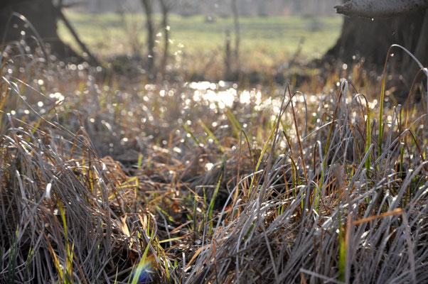 Bieselandschaft, Idyll in Feuchtbiotop, östlich von Krumke, Feb2021, c_Monika Thoms