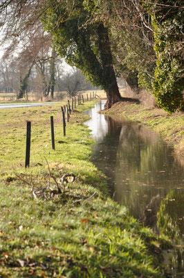 Biesezulauf, Graben am Rande des Krumker Schlossparks, Feb2021, c_Monika Thoms