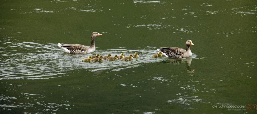 Sonntagsausflug der Familie E. am Rhein #Entenfamilie #oberes Mittelrheintal #Unesco Welterbe #Rhein #heiratenindeutschland #hochzeitslocations | (c) die Schnappschützen