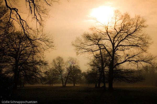 die Solitärweiden schimmern im Morgenlicht - es ist so friedlich, es ist so ein würdiger Tagesanfang für Patricks Geburts-Tag