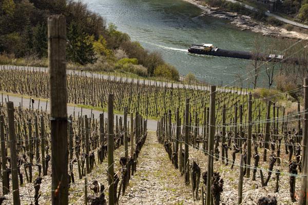 Weinberge entlang des Rheins #rheintal #weinberge #grünewiesen #unescowelterbe #oberes mittelrheintal | (c) die Schnapschützen