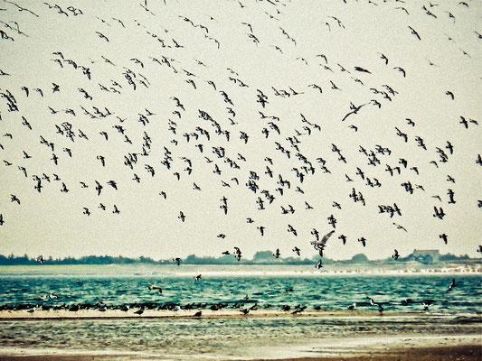 Vögel wie gemalt | (c) die Schnappschützen