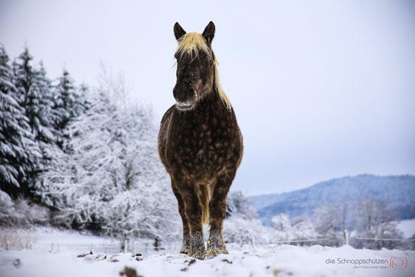 wunderschönes Tier - Vogesen Frankreich - reiseblog by Schnappschützen - www.schnappschuetzen.de