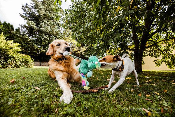Hundefotografie Köln | Tierfotografie Hunde | (c) die Schnappschützen