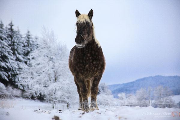 Pferdefotografie Köln | Tierfotografie Pferd | (c) die Schnappschützen