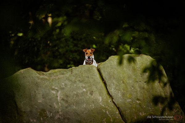 Tierfotografie Hunde | (c) die Schnappschützen