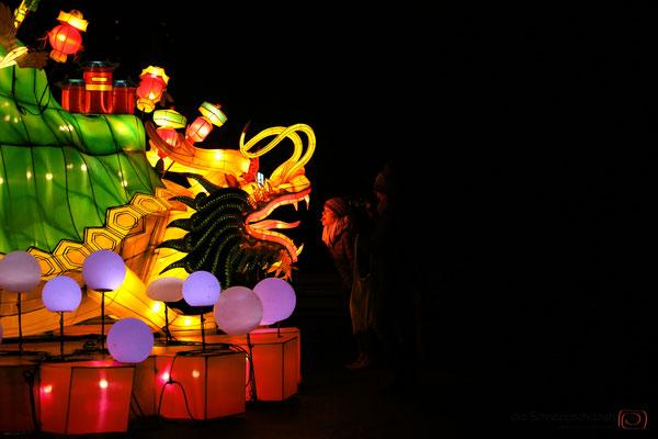 China Light Kölner Zoo | #fotografkoeln | (c) die Schnappschützen
