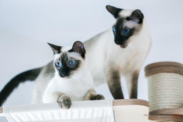 Tierfotografie Katzen | die Schnappschützen