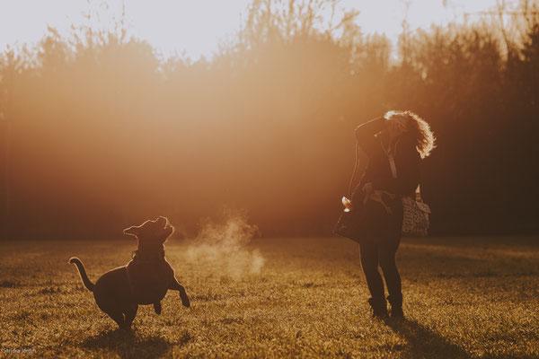 Hundefotografie Köln | Tierfotografie | Hundeportraits | Hundefotograf Köln | Bordeauxdogge | (c) die Schnappschützen