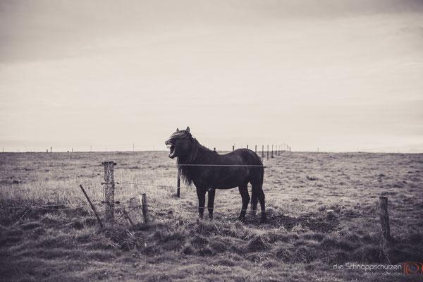 Tierfotografie Pferd | (c) die Schnappschützen