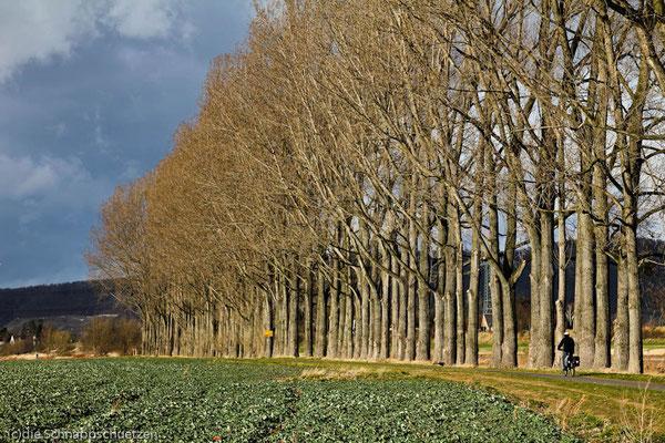 Elberadweg ab Schöna | Reiseblog by (c) die Schnappschützen - März 2014