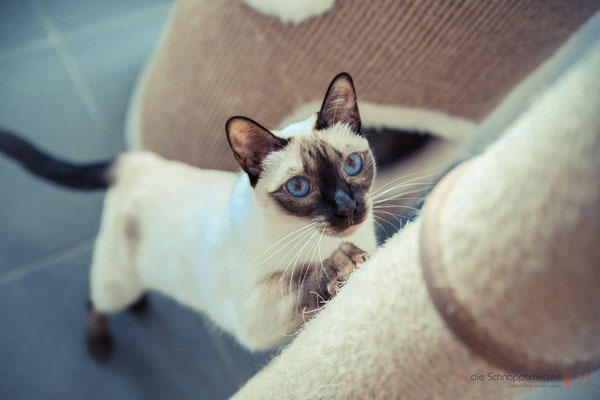 Katzenfotografie Köln | Tierfotografie Katzen | (c) die Schnappschützen