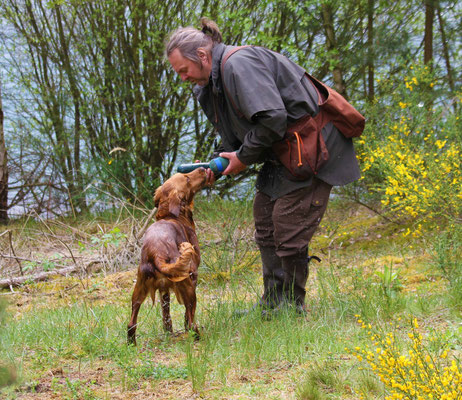 Gundog´s Choice Diamond