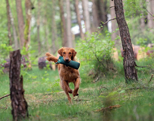 Gundog´s Choice Dale